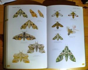 Vlinders (1)