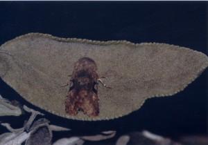Vlinders (14)