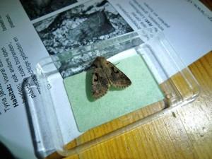 Vlinders (5)