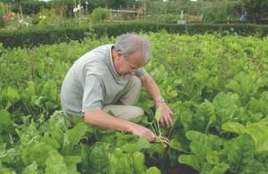 tuinieren 2