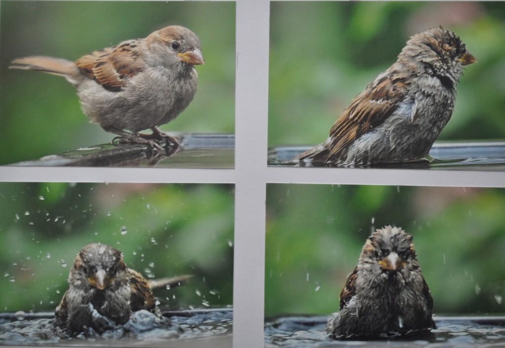 Encyclopedia - Foto in een bad ...